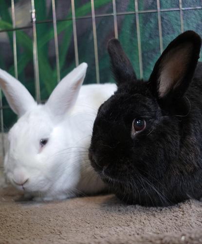 Bonnie & Clyde (Bonded Pair)