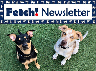 Sign up for FETCH!