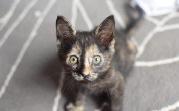kitten-teen-foster