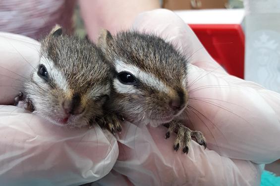 squirel babies