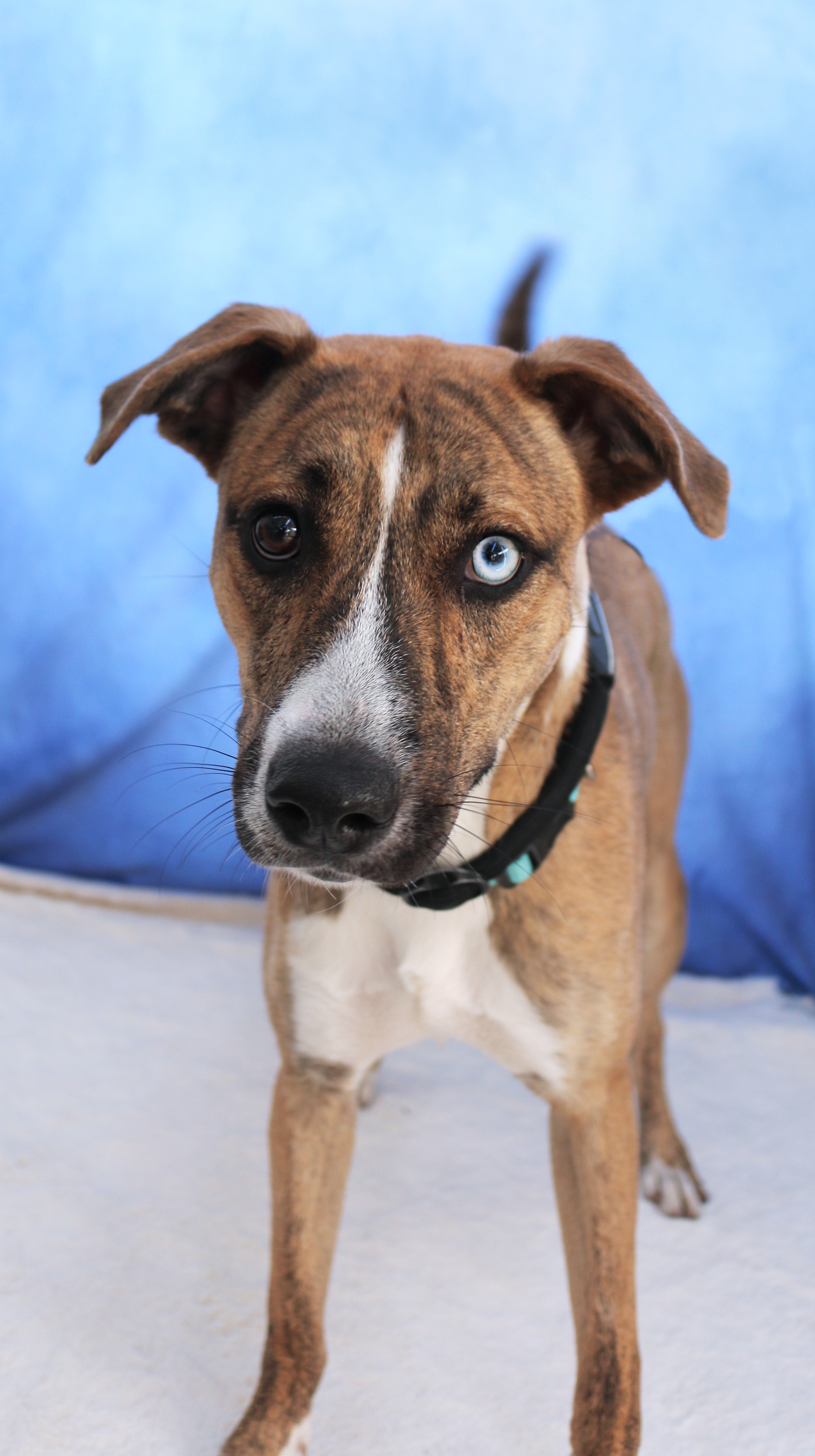Rancho Coastal Humane Society – Dedicated to the rescue and