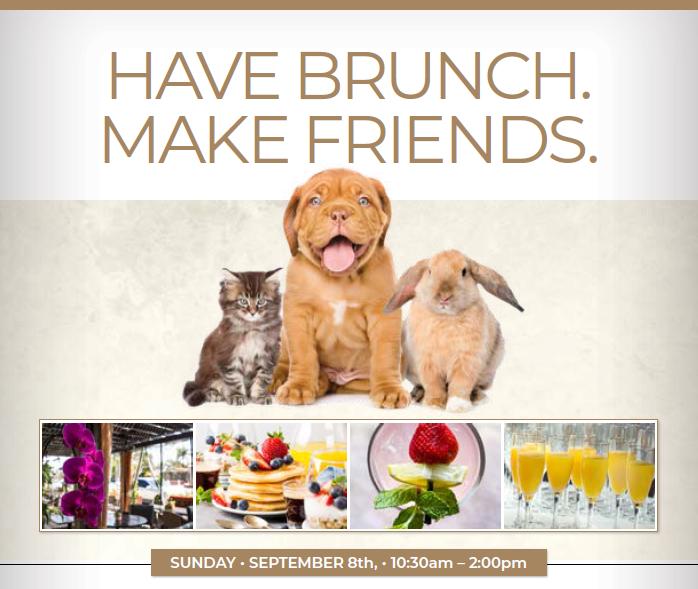 Have Brunch. Make Friends!